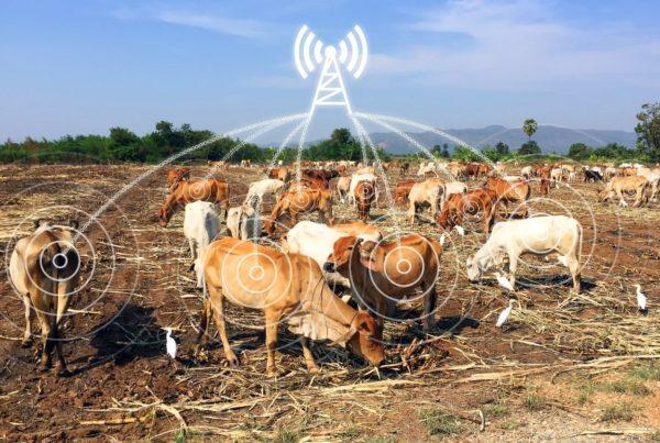 В умные коровы имплантировано устройство IoT для контроля ее поведения и мониторинга ряда важных параметров, например температуры тела. Активные IoT-метки используются круглые сутки для отслеживания активности и здоровья животных